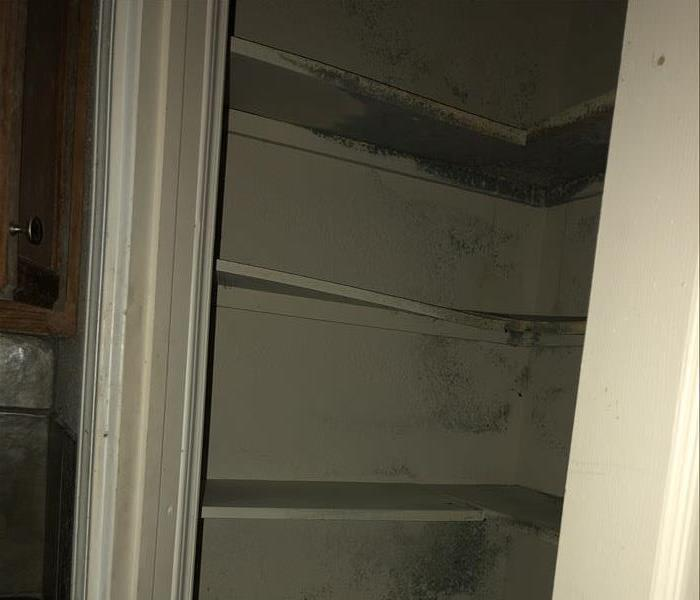 Empty pantry with microbial growth on walls
