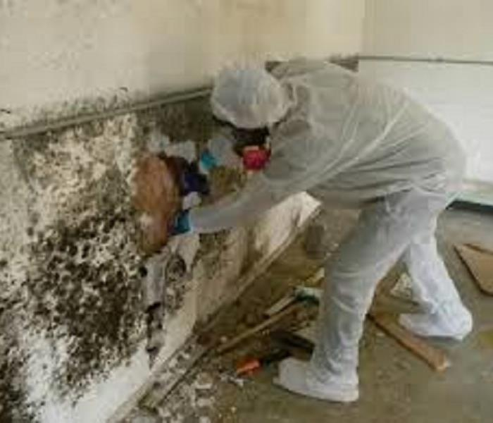 Worker in full PPE protection with a face mask cleaning mold on a wall