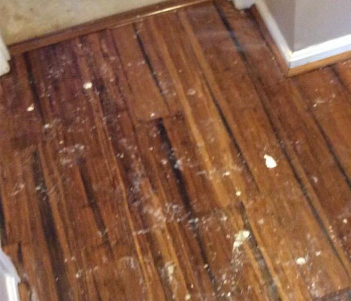 Brown hardwood floor with pieces of drywall on top of it.