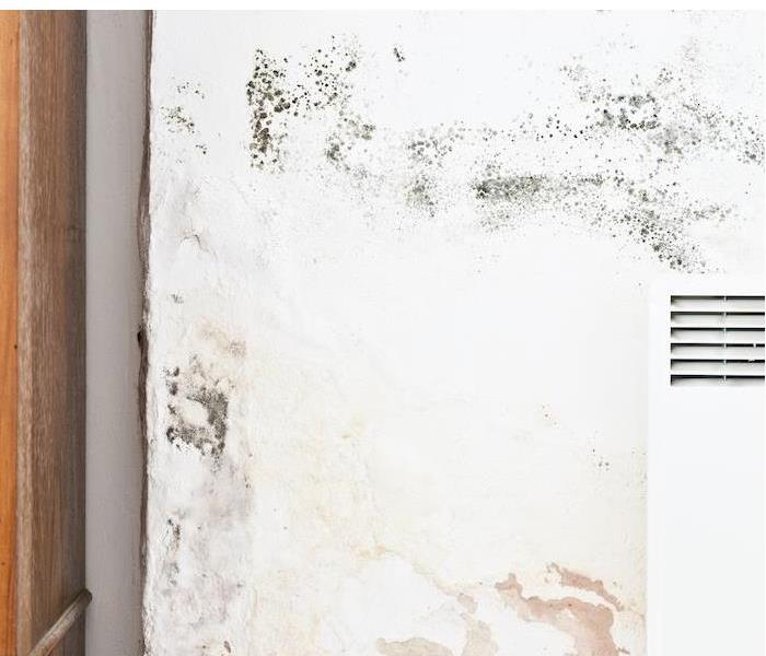 Mold Remediation Mold Damage Linked To High Indoor Humidity In San Antonio