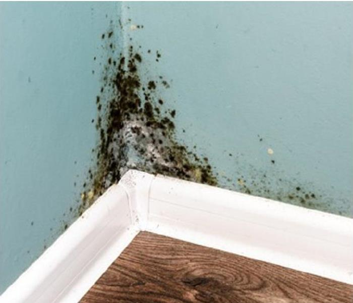 Mold Remediation How to Decolonize a Thriving Mold Colony in Your San Antonio Home