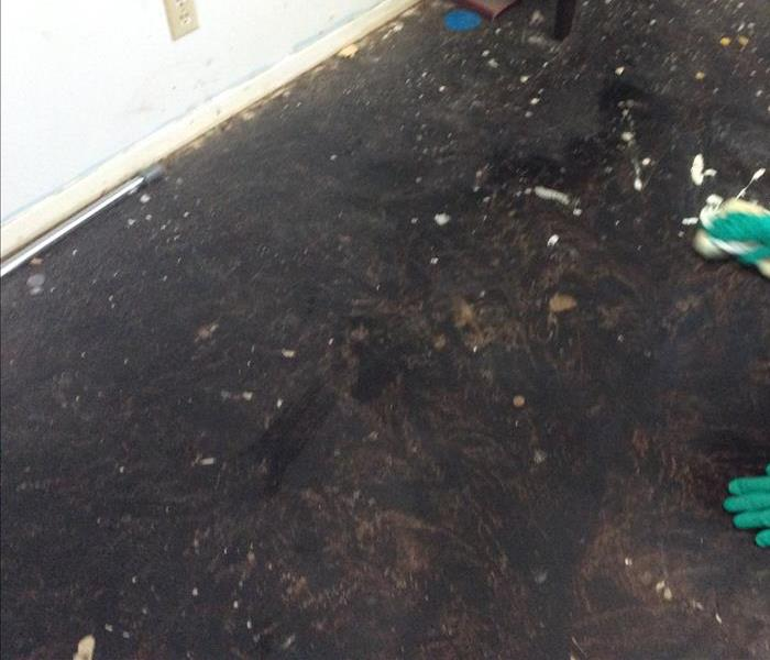 Black floor due to mold