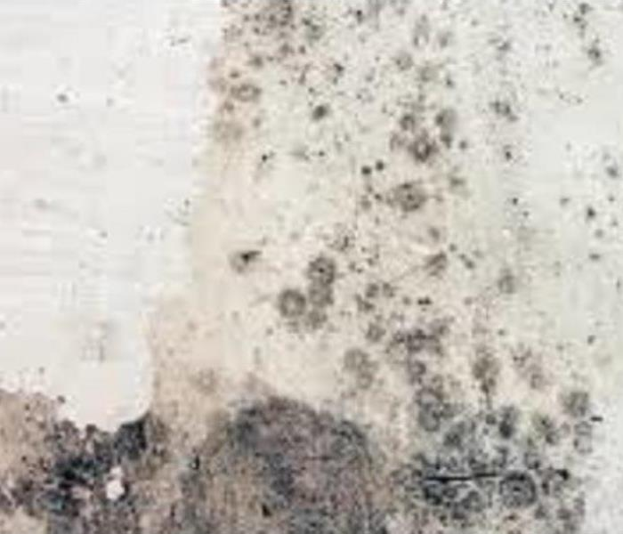 Mold covering a wall
