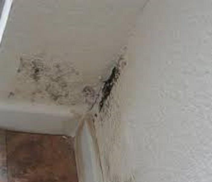 Mold on corner of room wall