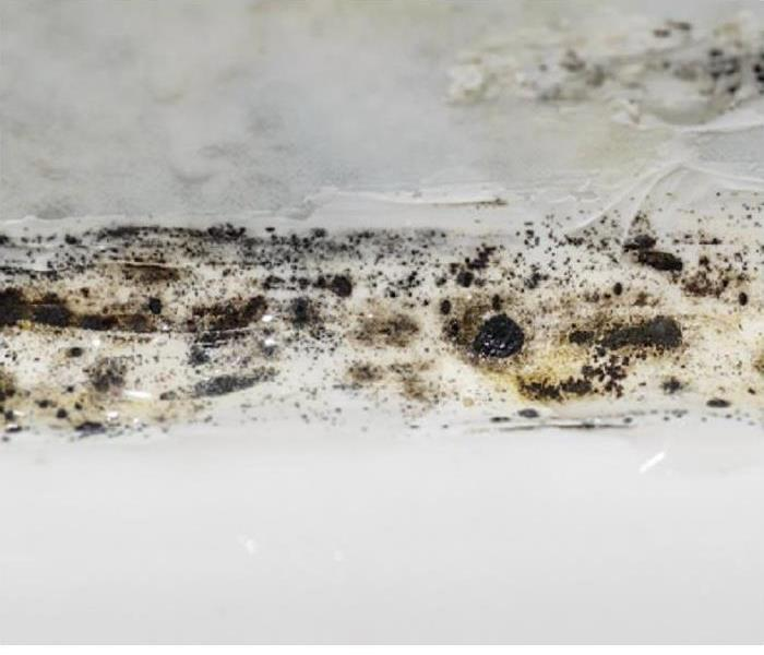 Mold on a white ceiling