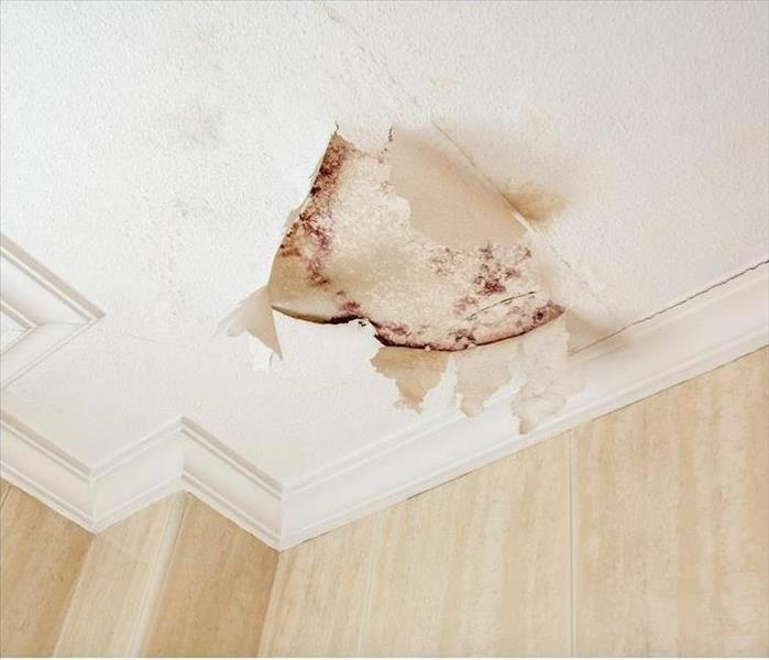 Mold on a white ceiling where the paint is coming off due to previous water damage