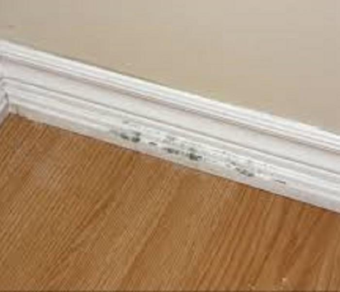 Mold on white baseboard